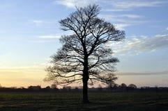Westwood Yorkshire do leste Inglaterra de Beverley do amanhecer Fotos de Stock