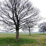 Westwood Yorkshire orientale Inghilterra di Beverley fotografia stock