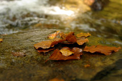 Wet. Autumn in mountains, after rain came sun stock images