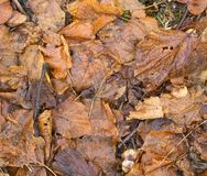It is wet. The fallen down foliage. Some fungi Royalty Free Stock Photo