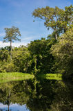 Wet African forest reflected in water (Republic of the Congo). Wet African forest reflected in water (Nouabal-Ndoki National Park, Republic of the Congo royalty free stock images