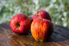 Wet apples Stock Photography