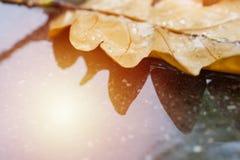 Wet asphalt with leaf. Colorful autumn background with yellow dry oak leaf. Wet asphalt with leaf macro Royalty Free Stock Photo