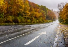 Wet asphalt road through forest in deep autumn. Gloomy rainy day background. painted arrow sign in fallen yellow foliage showing the direction Royalty Free Stock Image