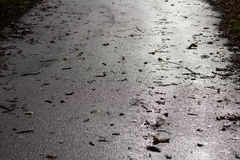 Wet asphalt road with leaves. On a sunny fall day Royalty Free Stock Photo