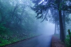 Wet asphalt road in the mountain forest. Rainy foggy day landscape Royalty Free Stock Photography