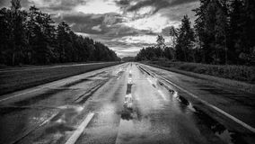 Wet asphalt road with sun reflections. And trees Royalty Free Stock Photography