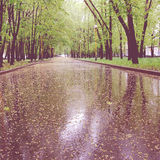 Wet asphalt with small yellow blooms in the spring park - vintagу photo. Stock Images
