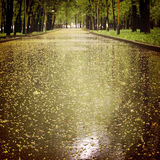 Wet asphalt with small yellow blooms in the spring park - vintage effect. Royalty Free Stock Photo