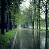Wet asphalt in the spring park alley - vintage effect. Stock Image