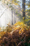 Wet autumn forest with fog Stock Images