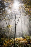 Wet autumn forest with fog Stock Image