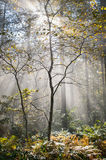 Wet autumn forest with fog Royalty Free Stock Image
