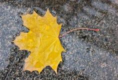 Wet autumn leaf. Wet yellow autumn leaf on marble sidewalk Stock Photo