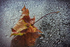 Wet autumn leaf. Lying on the glass, rain drops Stock Images