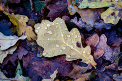Wet autumn leafage. Abstract natural background Royalty Free Stock Photography