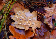 Wet autumn leafage. Abstract natural background Royalty Free Stock Photos