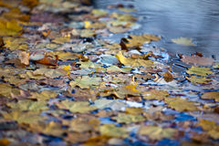 Wet Autumn Leaves Stock Photos