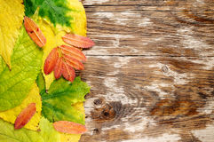 Wet autumn leaves Royalty Free Stock Image