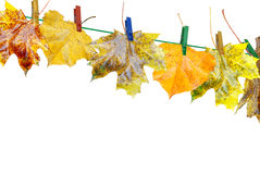 Wet autumn leaves Royalty Free Stock Images
