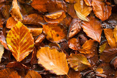 Wet autumn leaves background texture Stock Image