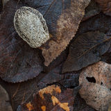 Wet autumn leaves and the dried fruit of squirting cucumber Royalty Free Stock Photos