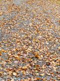 Wet autumn leaves on a forest path in Belgium, texture background royalty free stock photography