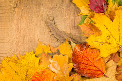 Wet autumn leaves Stock Photography