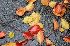 Wet autumn leaves on sidewalk Stock Photos