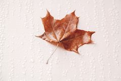 Yellow maple leaf on wet wall Stock Images