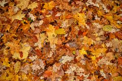 Wet autumnal leaves background Royalty Free Stock Photo