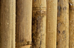 Wet Bamboo. After the rain stock images