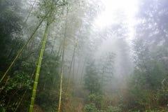 wet bamboo in mist rainforest in area of Dazhai Stock Image