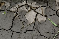 Wet barren soil in cracks Royalty Free Stock Image