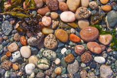 Wet Beach Pebbles. Beach pebbles glistening in the sun and water stock images