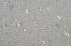Wet beach sand with seashells Stock Photo