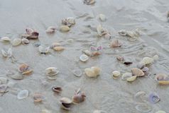 Wet beach sand with seashells Royalty Free Stock Photos