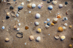 Wet beach sand with seashells background Stock Image