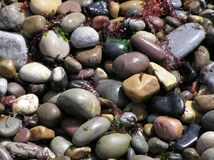 Wet Beach Stones. Stones on a beach, ideal background or texture image Royalty Free Stock Images