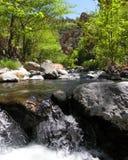 Wet Beaver Creek Fun - Arizona. Pleasant little oasis in Arizona stock photography