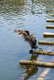 Wet bird Royalty Free Stock Photography