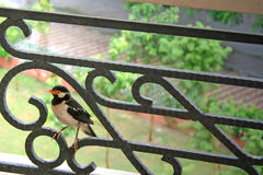 Wet bird on railing Royalty Free Stock Photography