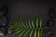 Wet black basalt stones with green leaf, on black background. With water droplets Stock Photos