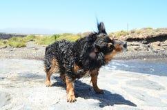 Wet Black Dog Stock Photo