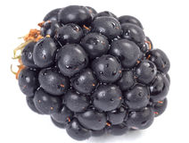 Wet blackberry. On white background with shadow Stock Photo