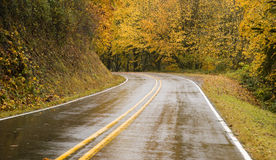 Wet Blacktop Two Lane Highway Curves Through Fall Trees Autumn Royalty Free Stock Images