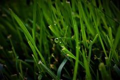 Wet blades of fresh grass
