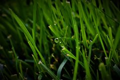 Free Wet Blades Of Fresh Grass Stock Images - 126673134