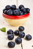 Wet Blueberries Stock Image