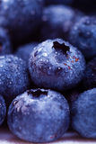 Wet blueberries Stock Images